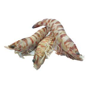 Langostino tigre de Sanlúcar